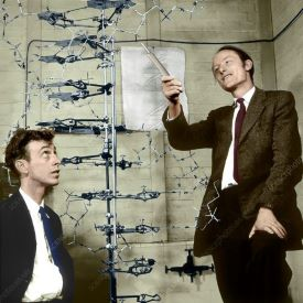 Watson & Crick DNA model